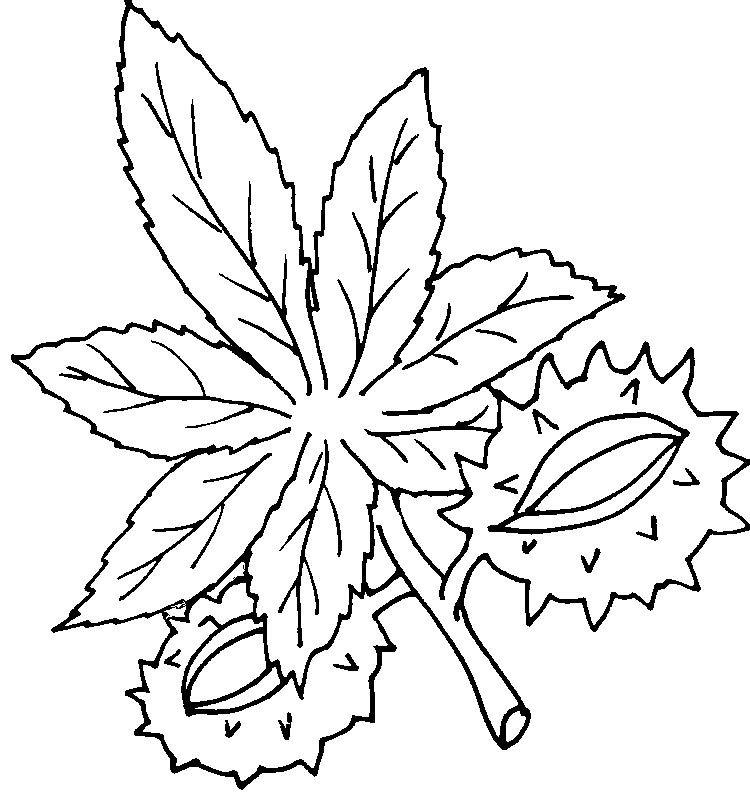 malvorlage kastanienblatt   Coloring and Malvorlagan