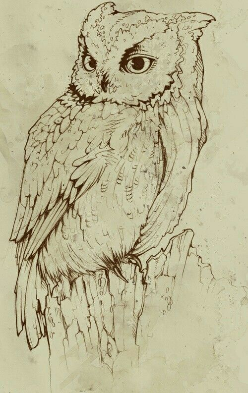 Pin By Susan Carrell On Owl Sketches Pyrography