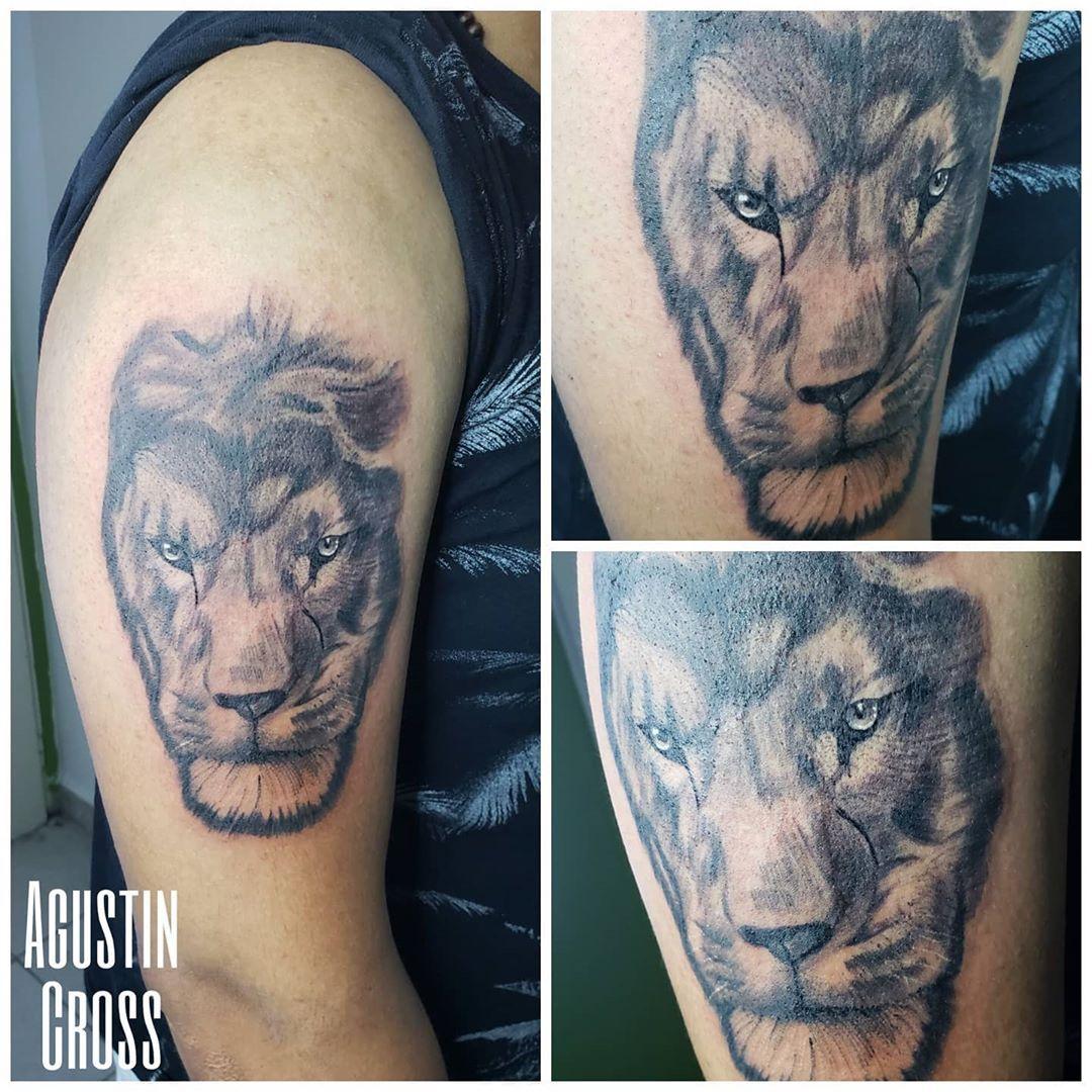 Primera sesión ***Por turnos o consultas mandame wp 3813277541 #tattoo #tatuaje #worktattoo #inktattoo #tattooink #leon #leontattoo #liontattoo #blackandgrey #blackandgreytattoo