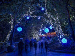 LA Zoo Lights, Los Angeles Home Design Ideas