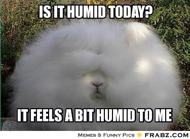 67263a8ddf6efec999bf44b1028b970a is it humid today? humid bunny meme sp15 ict200 pinterest