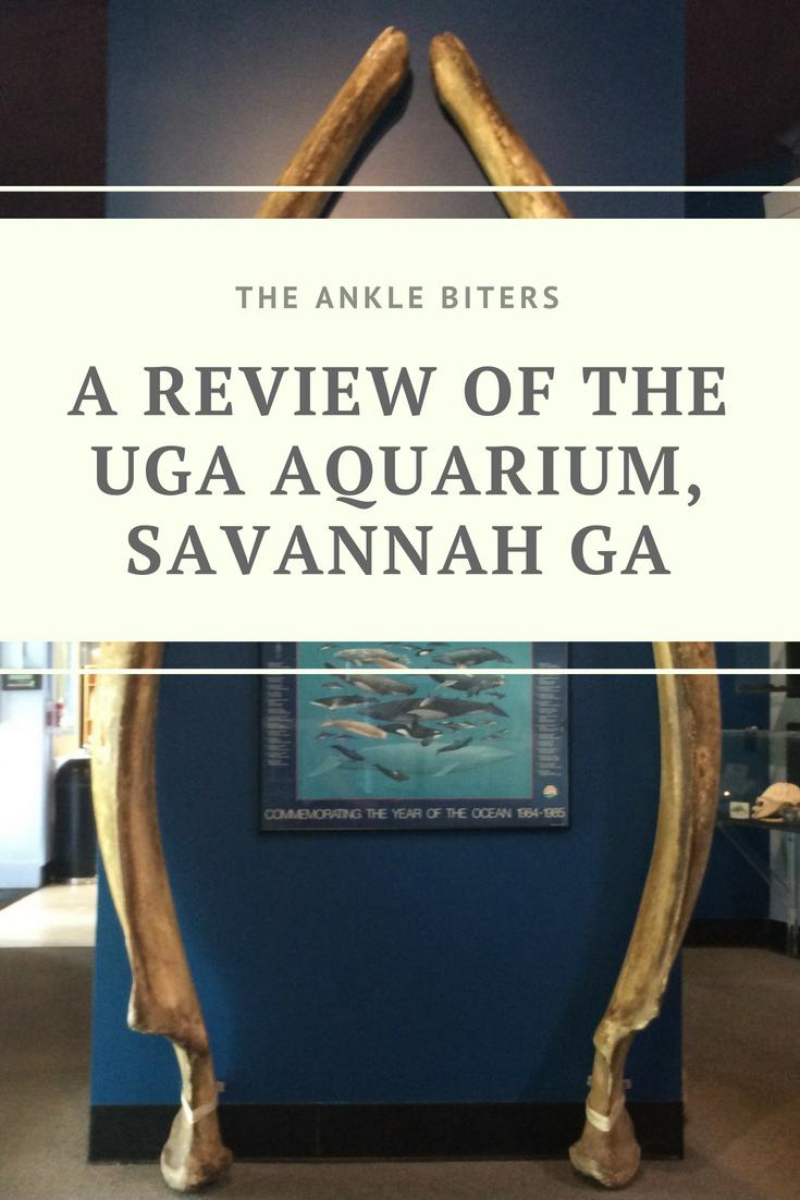 Review Of The Uga Marine Science Center And Aquarium In Savannah Ga The Ankle Biters Savannah Chat Science Center Savannah Ga