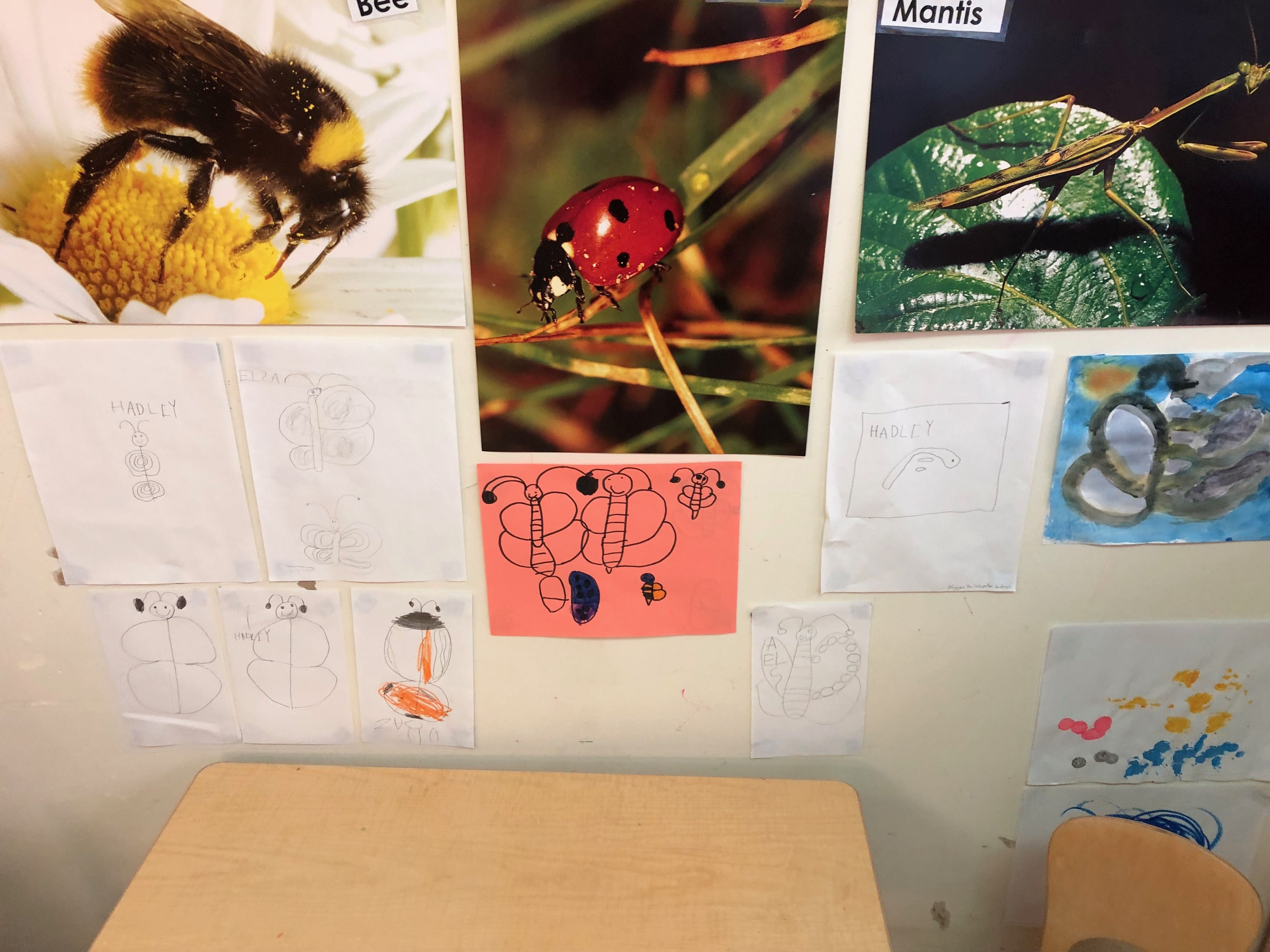 Insect Study Kids Observations