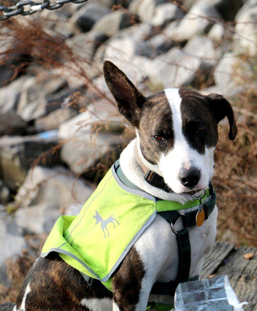 6 Reasons Your Dog Should Have A Lifejacket Dog Cooling Vest