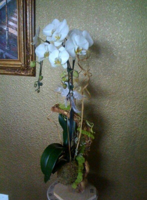 White Phalaenopsis on drift wood