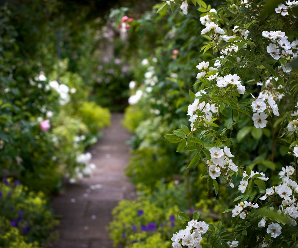 Home garden design flower  pueA quiet rural hideaway which an energetic family have made their