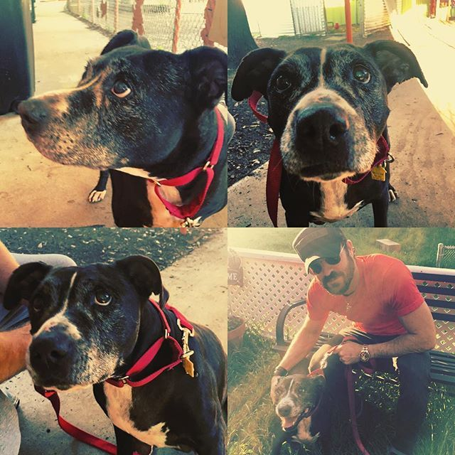 Justin Theroux stops by Austin Pets Alive to walk dogs