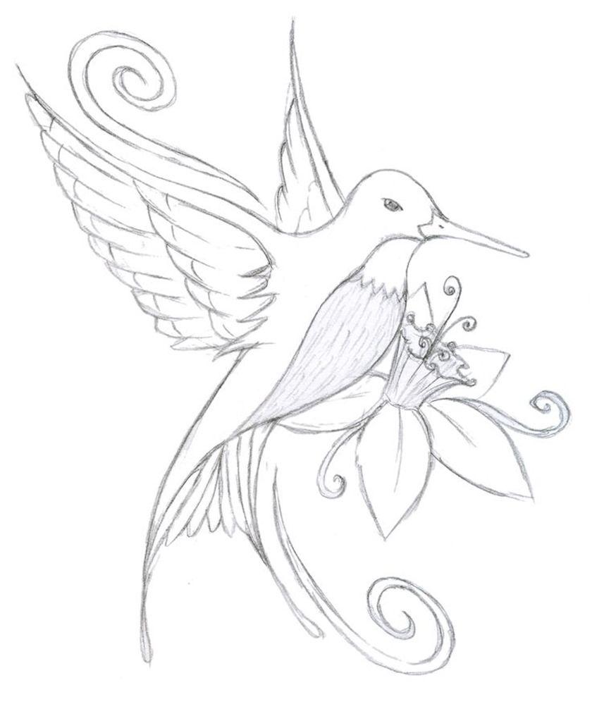 Hummingbird and flower drawing smart art pinterest hummingbird
