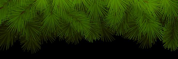 Pine Branches Decoration Transparent Png Clip Art Branch Decor Pine Branch Christmas Tree Decorations