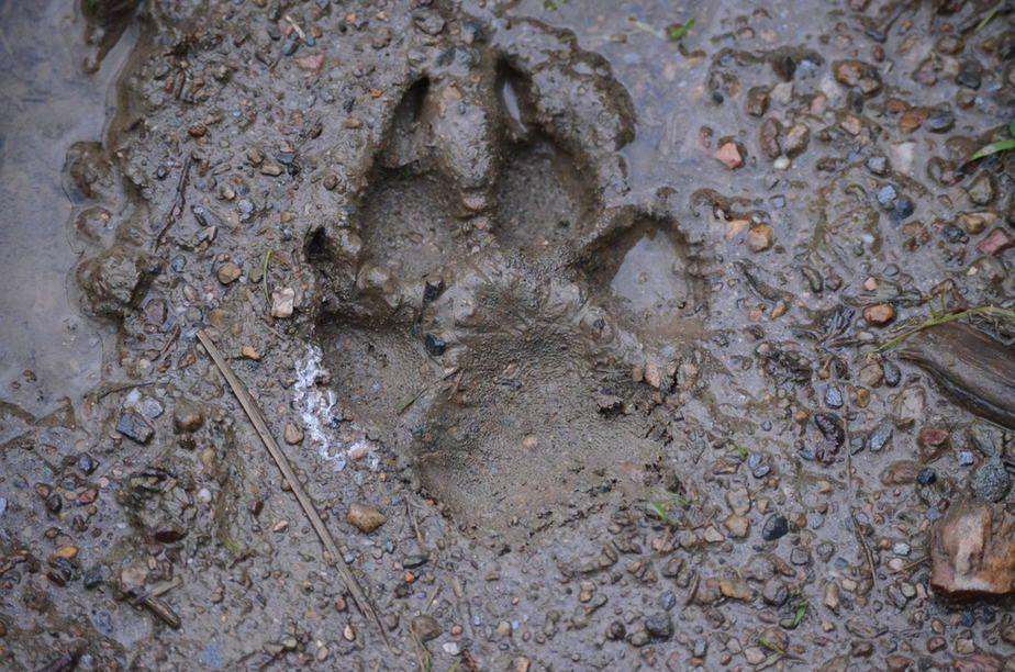 Five Ways to Fix a Muddy Backyard Dog Trail: Step By Step ...