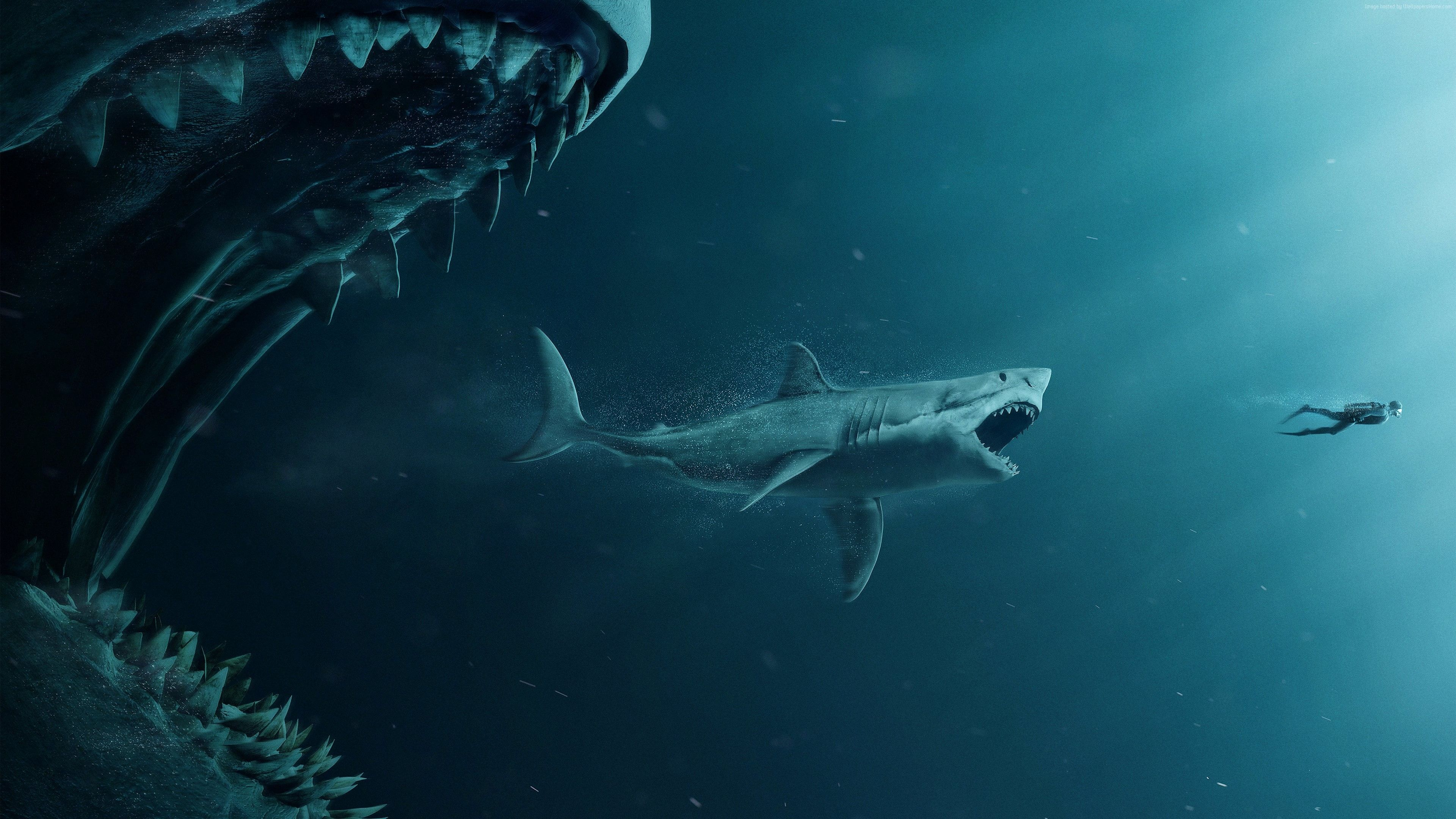 Wallpaper The Meg, shark, diver, 4K, Movies https//www
