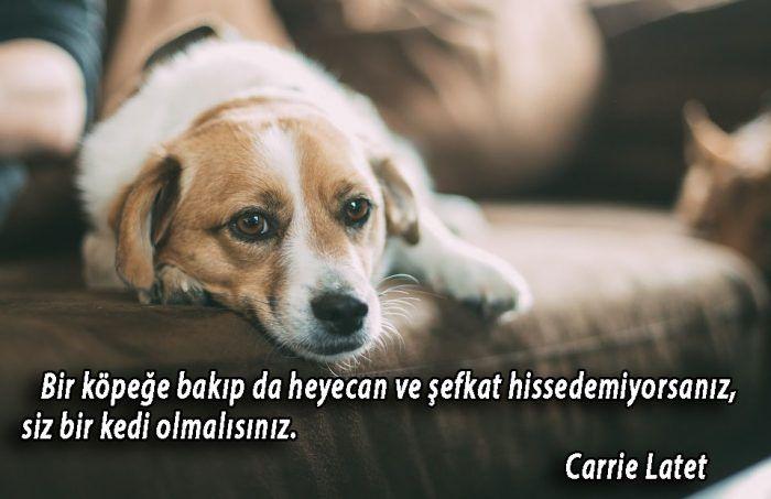 İlgili resim | Hayvanlar ve Özlü Sözler | Dogs, Home ...
