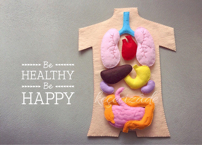 Human anatomy felt set, science toy, educational felt story ...