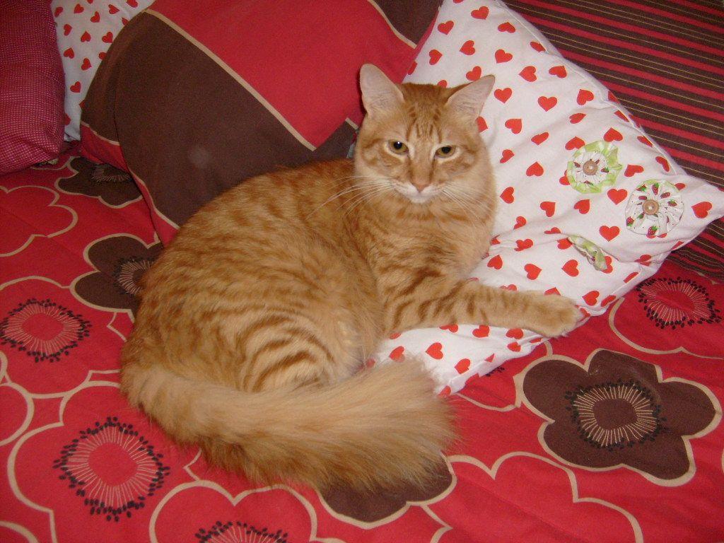 Leo dorme com travesseirinho