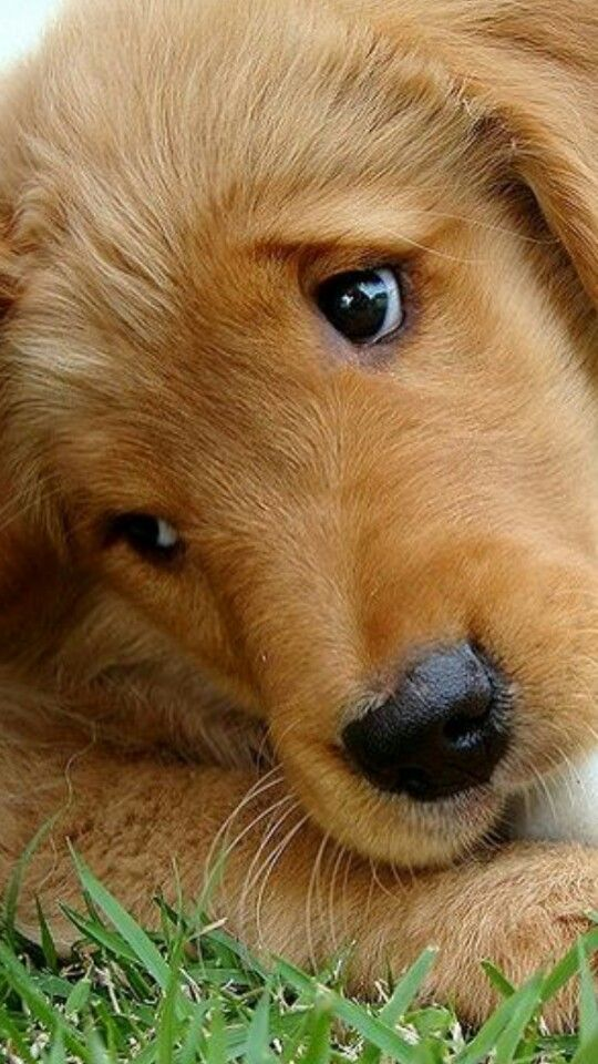 83 Best Animals that I love images in 2013 | Animales