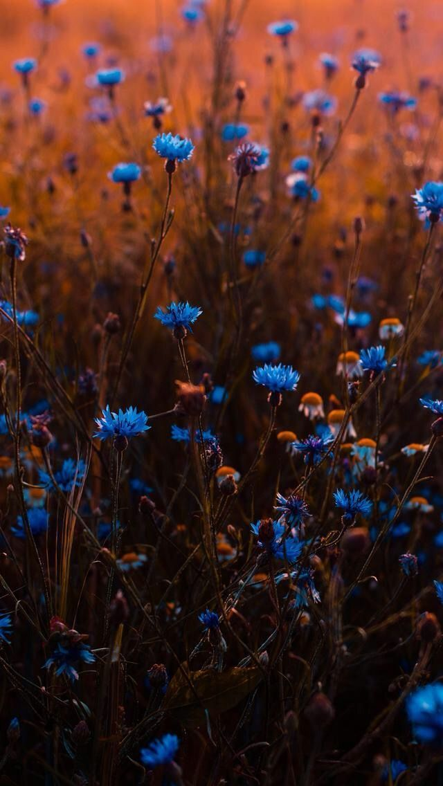 Wildflowers – Marie Bänsch - Basteln ideen #landscapepics