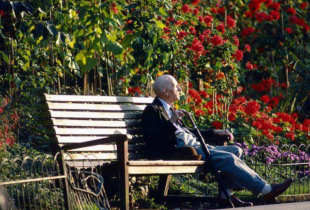 Old Man On Bench Regent S Park Park Bench Regents Park Park