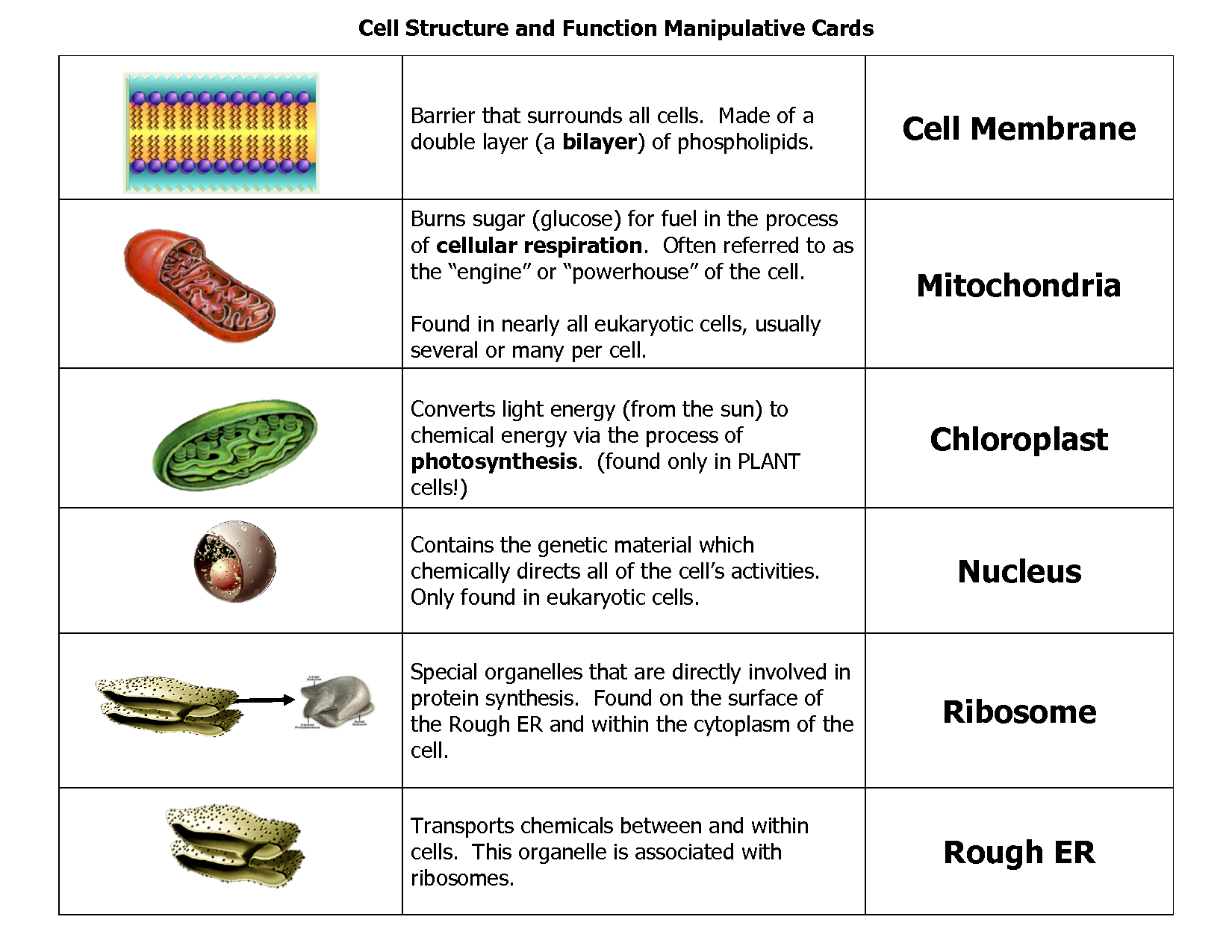 Human Cell Parts Functions