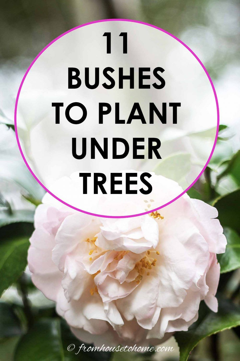 This list of shrubs is perfect for my shade garden I wasnt sure how to fill in the garden bed and now I have a bunch of different bushes that will work in my backyard gar...