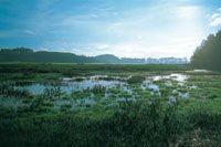 Los humedales se caracterizan por tener una extensa cobertura de plantas acuáticas como los juncos y por su poca profundidad.
