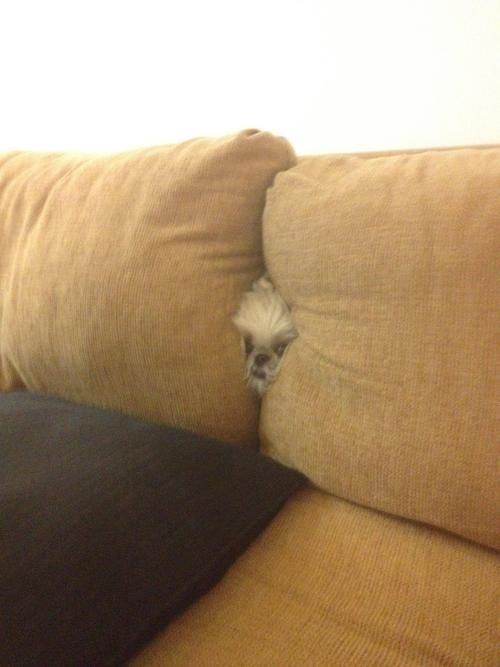 Lol! whenever something goes missing - check in between the couch cushions.. also holds true for the dog