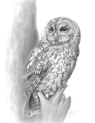 Nolon Stacey Wildlife Artist: Owls