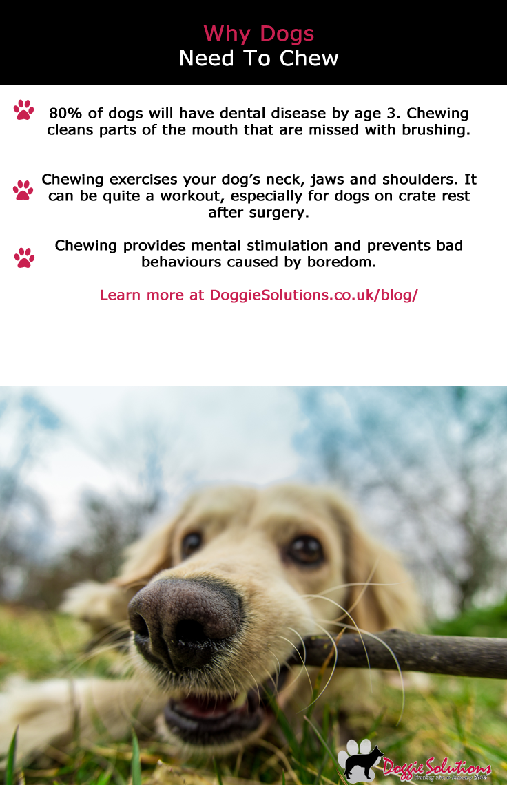 Why Dogs Need To Chew Dogs, Pets, Online pet store