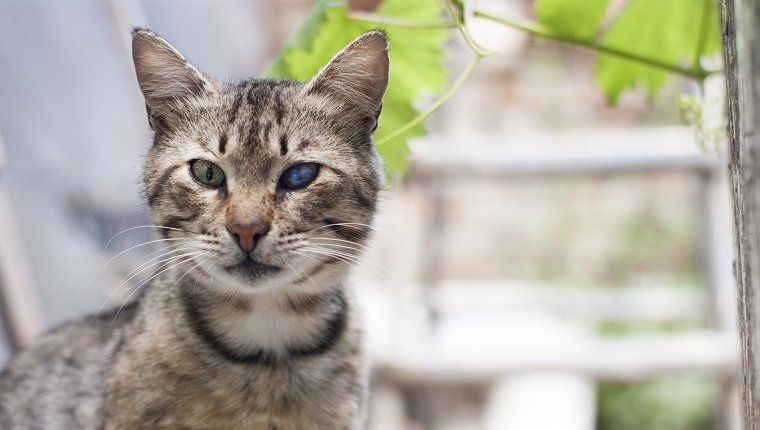 Cataracts In Cats Symptoms Causes And Treatments Cute Animals Images Cats Cat Symptoms