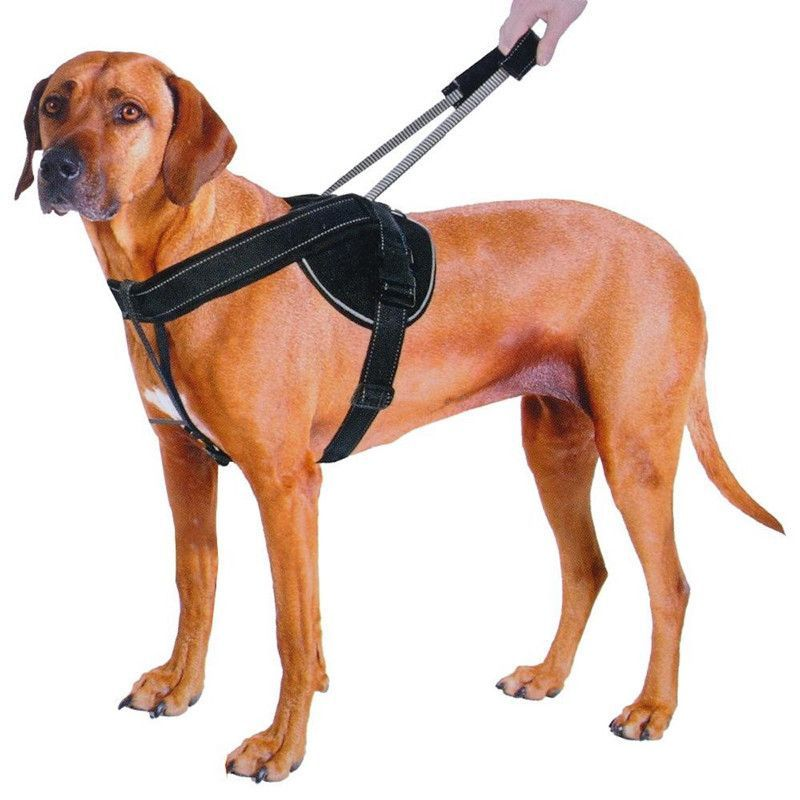 Quick Control Training Harness With Integrated Retractable Handle