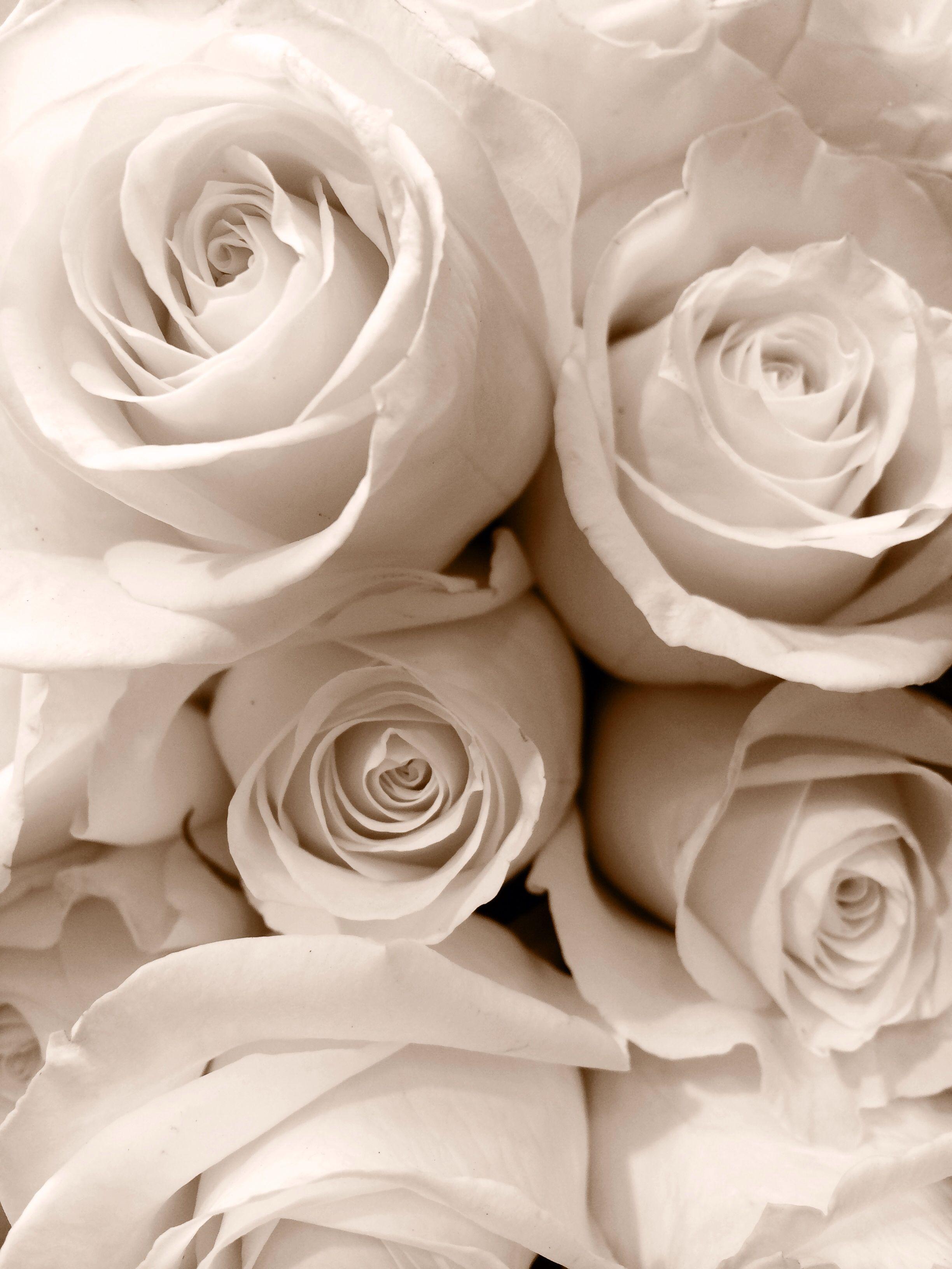 White Roses My Favorite Type Of Flower White Roses Rose White Flowers