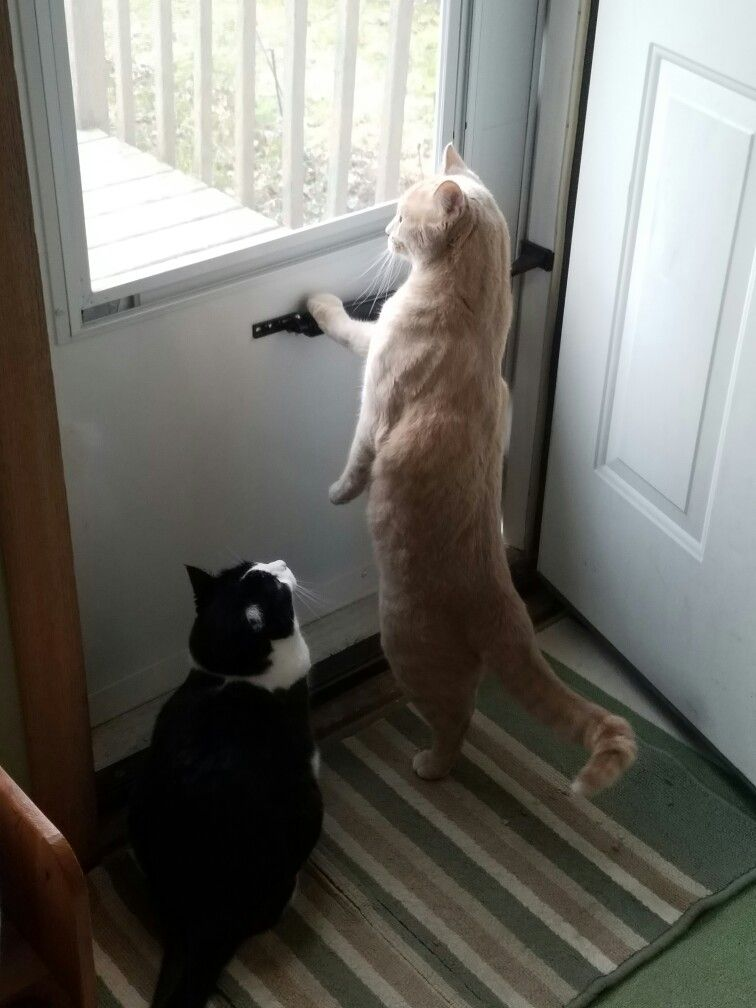Hunting for birds!