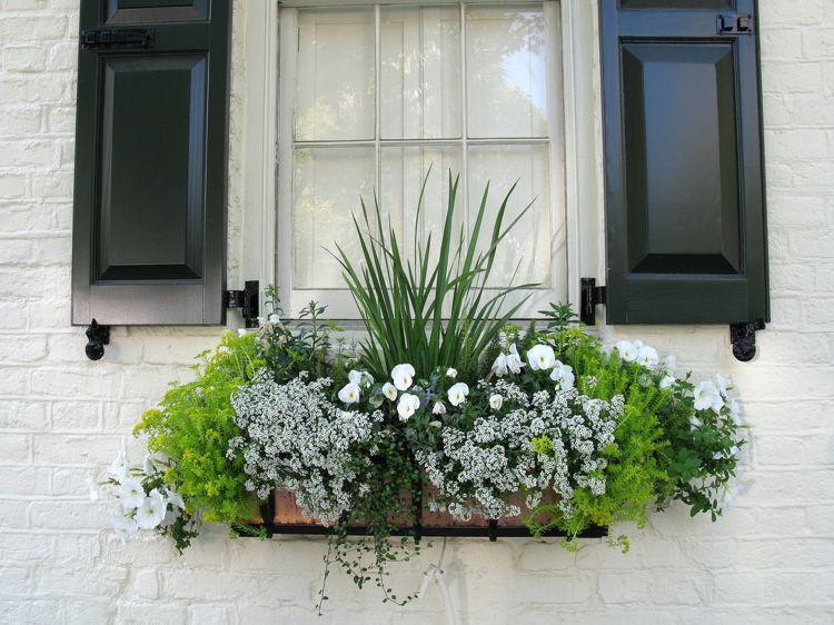 Balkonpflanzen In Weiss Tipps Fur Eine Einfarbige Bepflanzung