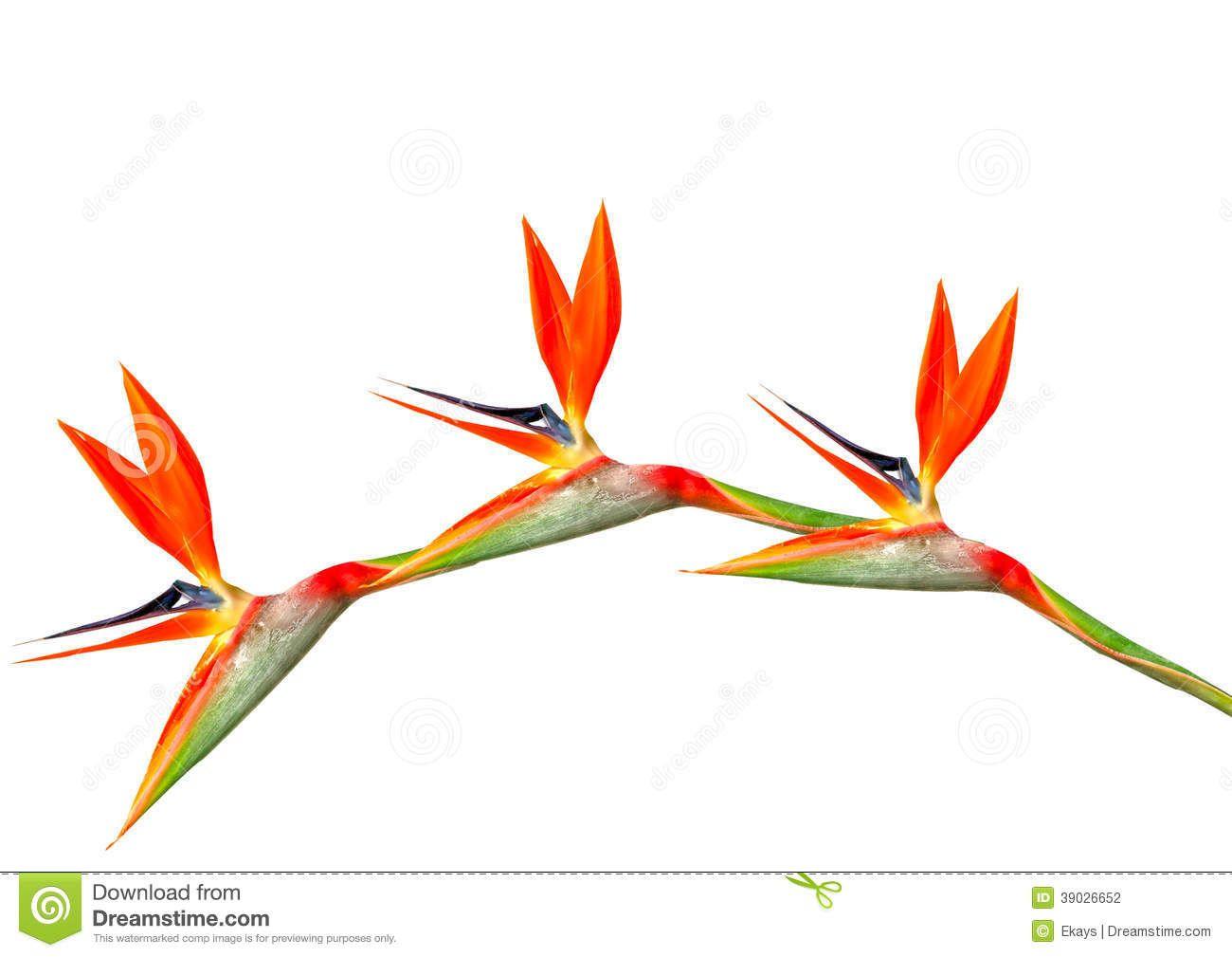 Resultado de imagen para imagenes de flores aves del paraiso | Arco ...