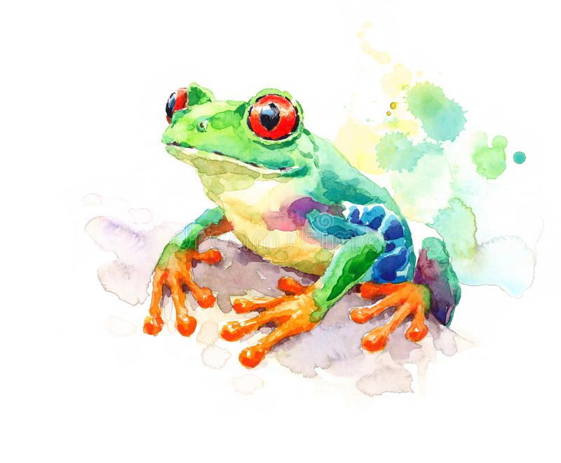 Red Eyed Green Tree Frog Watercolor Nature Illustration Hand
