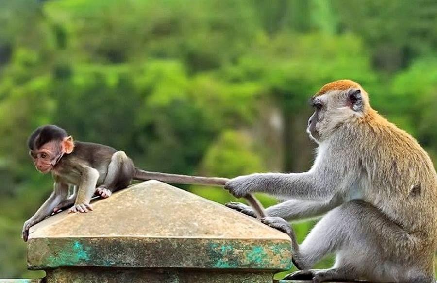 Прикольные картинки о животных фото