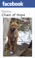 Check out chain of hope!  They do a lot of work for dogs and cats!  Great charity