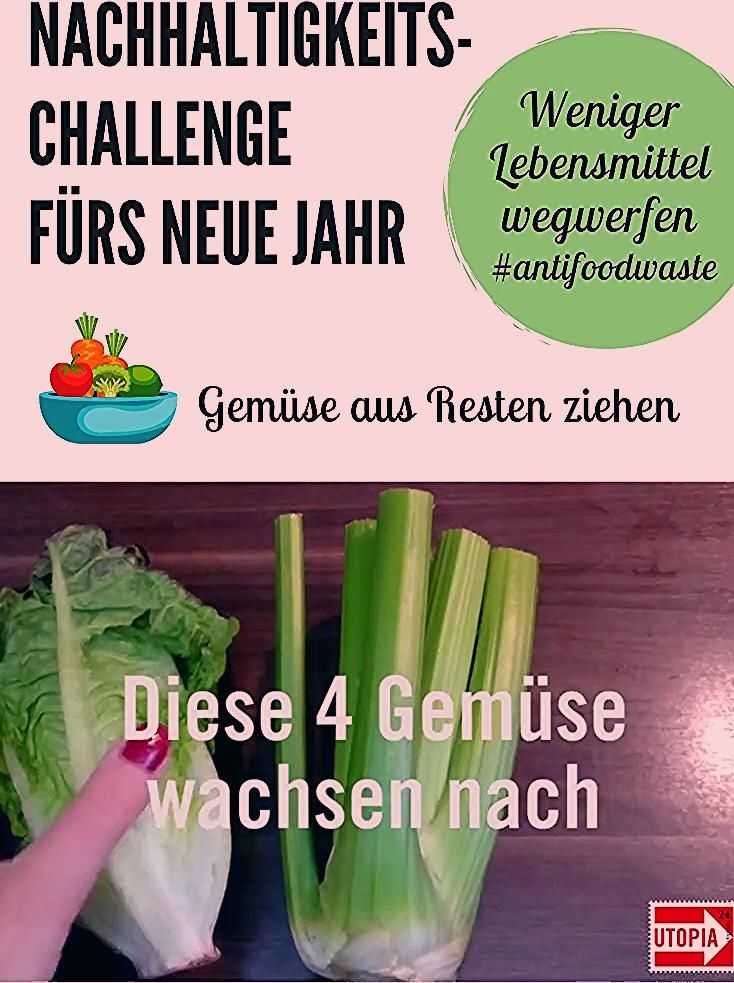 Photo of Gemüse selber ziehen: 8 Lebensmittel, die immer wieder nachwachsen