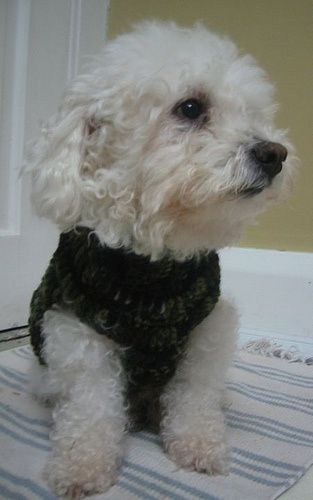 The Quest For A Crocheted Dog Sweater Pattern Dog Sweater Pattern