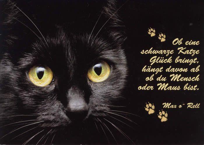 hier bei uns von ebenblatt gibt 39 s die coolsten und lustigsten katzen shirts f r katzenliebhaber. Black Bedroom Furniture Sets. Home Design Ideas