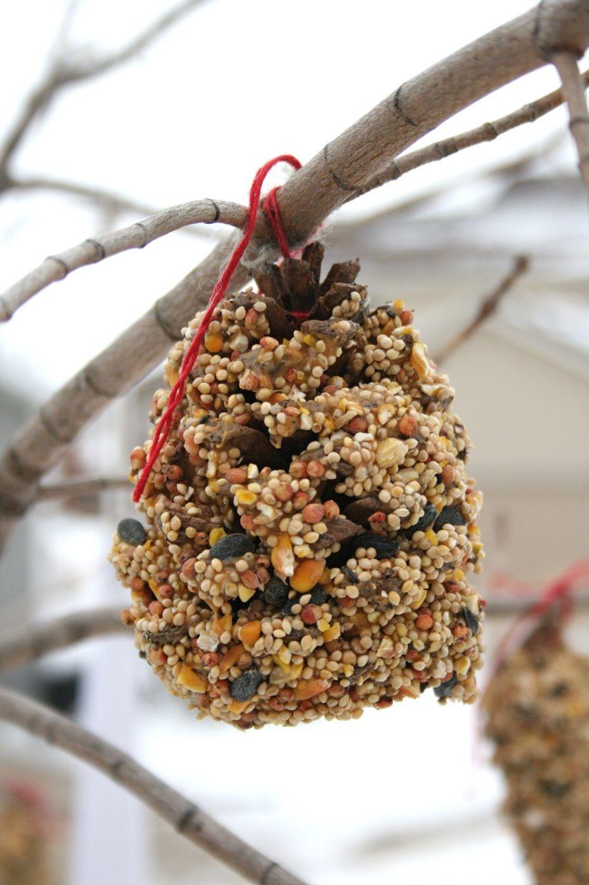 Bird Feeder Pine Cone Bird Feeder Cones Crafts Bird Feeders