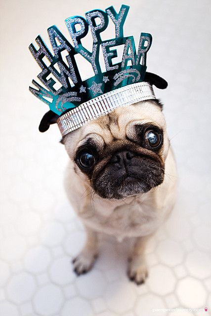 25 dogs who are so puppin excited for 2015