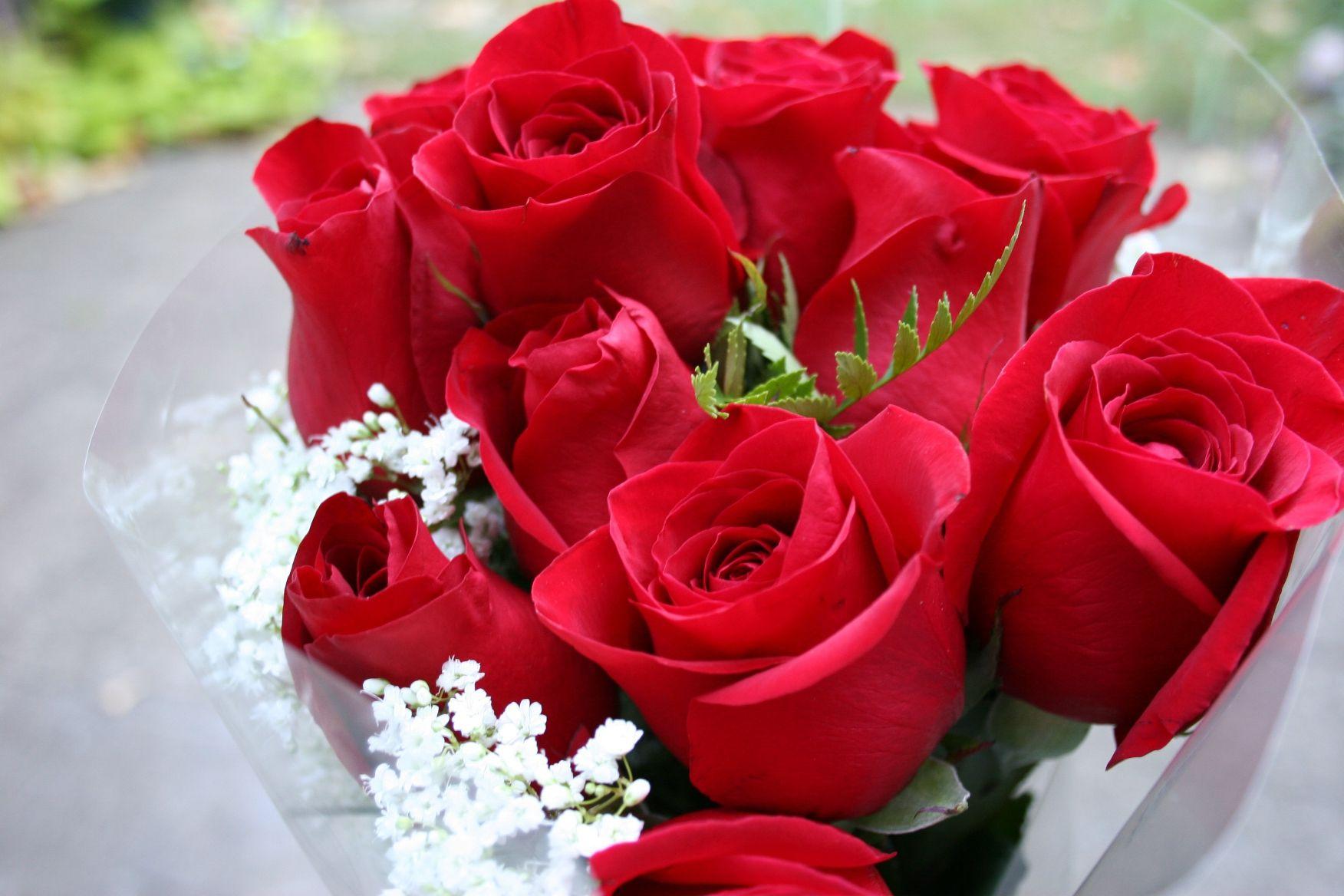 Beautiful Rose Pictures Animated | beautiful flowers orange flower ...