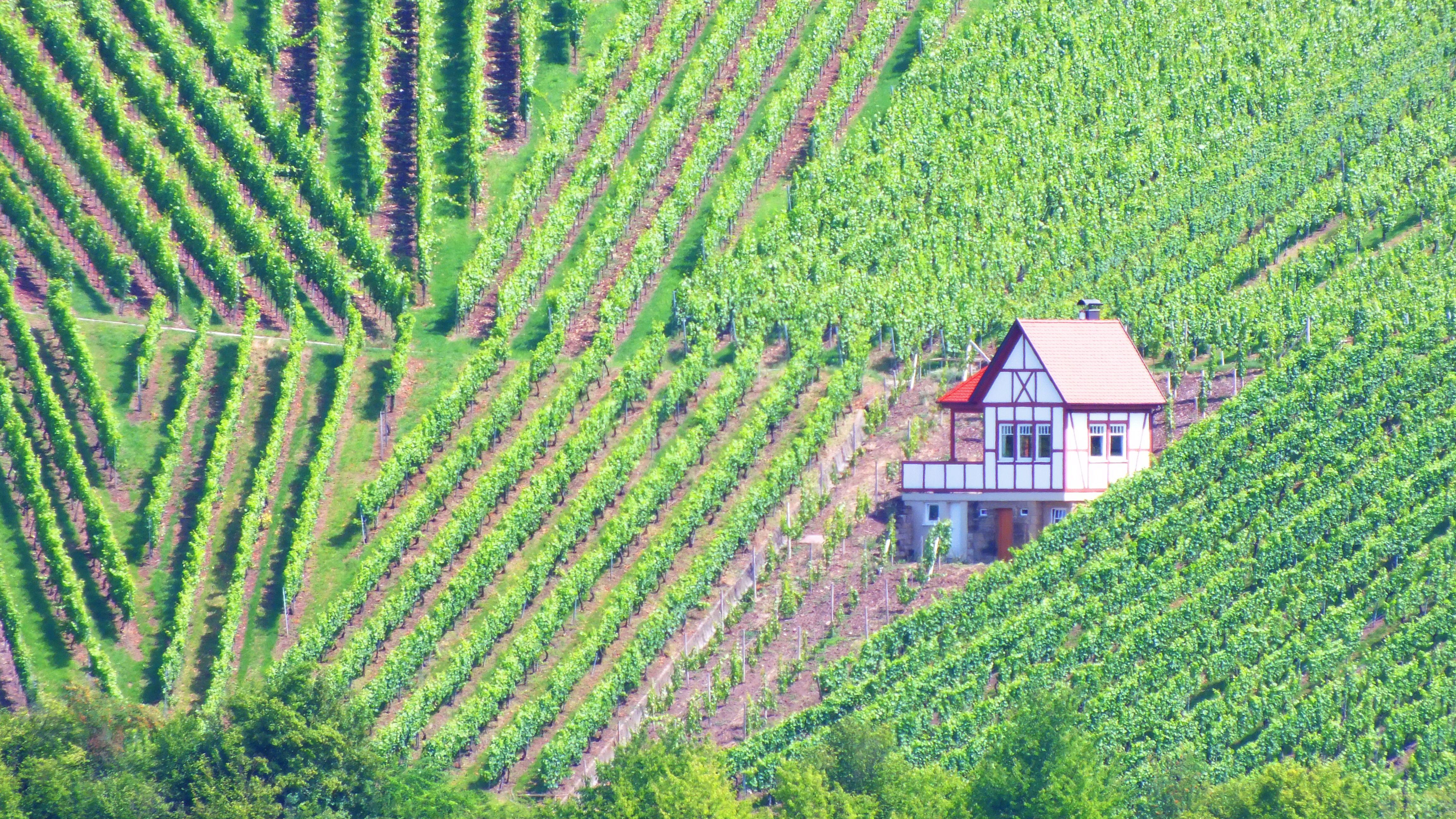 in den Weinbergen um Weinsberg, Germany Weinsberg