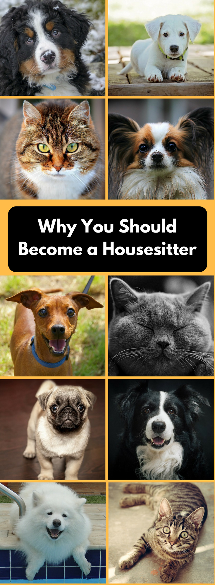 House Sitting While Traveling Ideal For Couples Pet Sitters