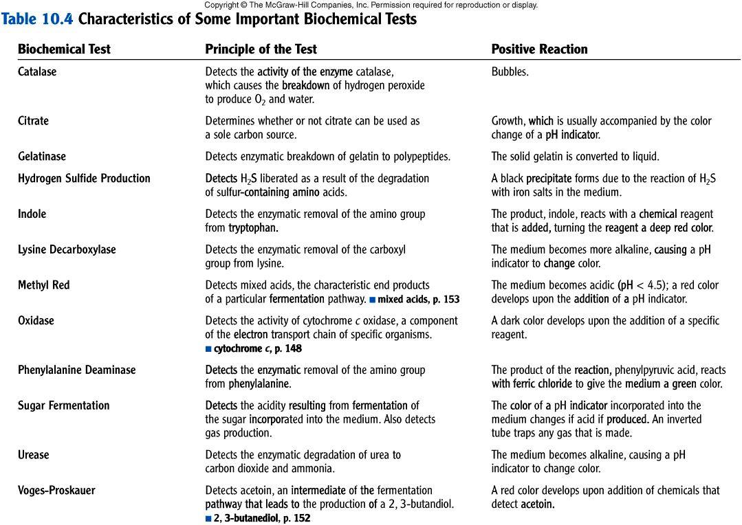 Worksheets Dichotomous Key Worksheet dichotomous key for identifying salmonella google search key