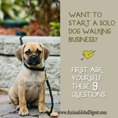 Want To Start A Solo Dog Walking Business First Ask Yourself These 9 Questions Dog Walking Business Dog Walking Flyer Dog Walking Services