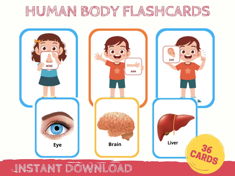 Human Body Flashcards Anatomy Flashcards Human Body