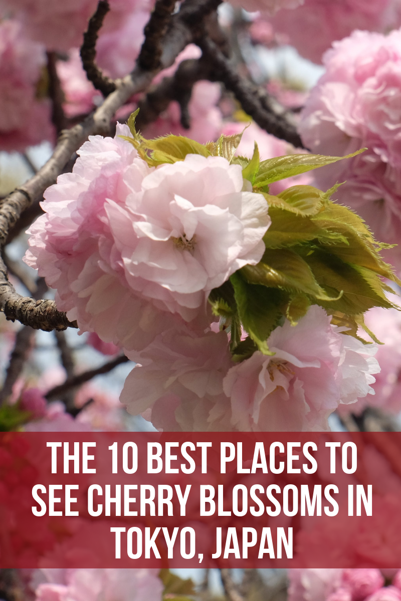 The 10 Best Places To See Cherry Blossoms In Tokyo Japan Places To See Cherry Blossom Tokyo Holidays