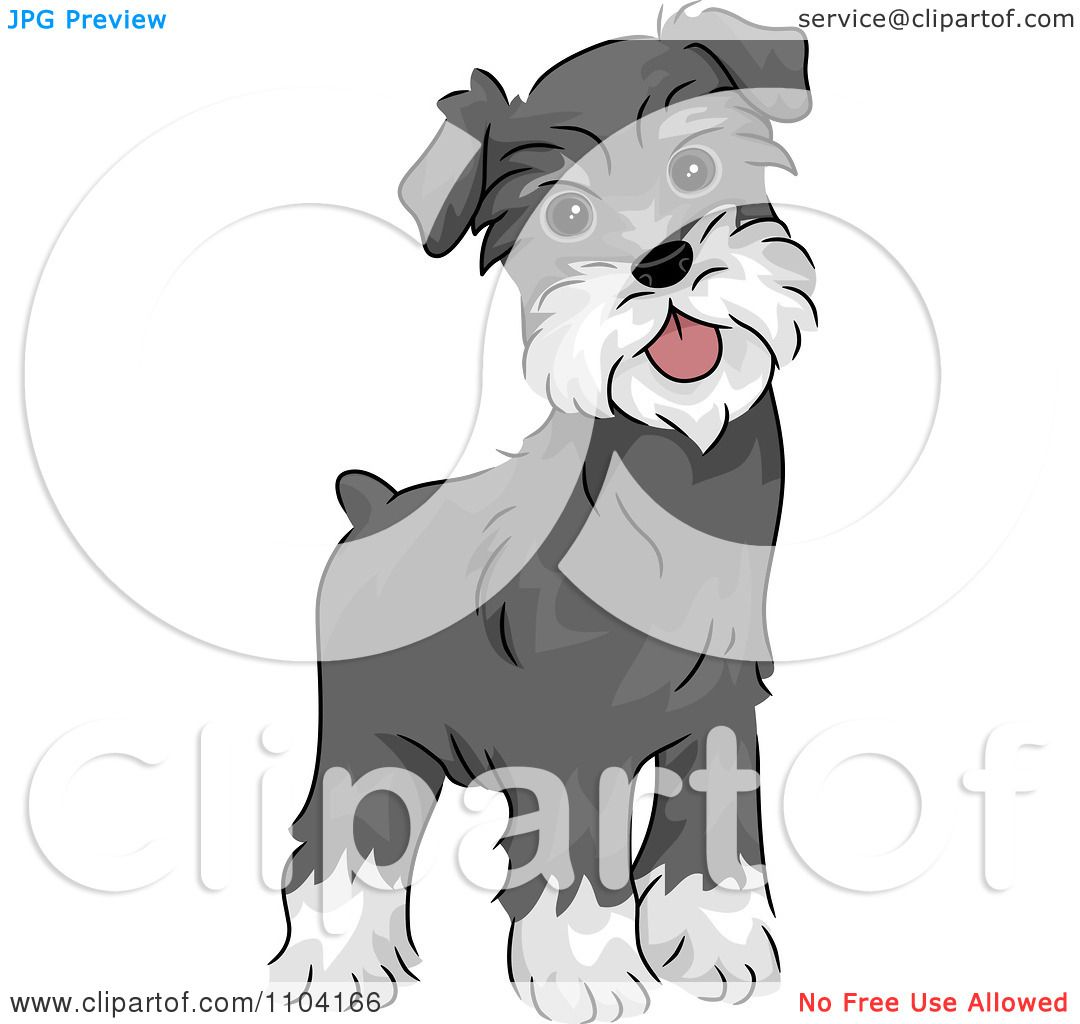 Clipart Happy Alert Miniature Schnauzer Dog Royalty Free Vector Schnauzer Schnauzer Dogs Cartoon Clip Art