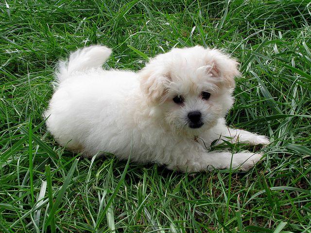 Loki Cute Animals Pets I Love Dogs